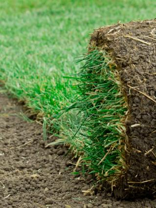 Roll of cut sod; Copyright Mdockery at Dreamstime.com