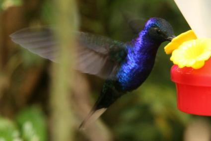 how to make hummingbird food - Homemade Hummingbird Food