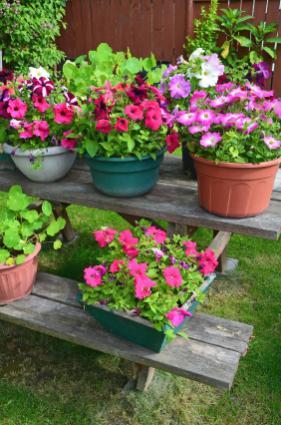 Petunia planters