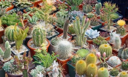 Cacti and other succulents; © Valerii Rublov | Dreamstime.com