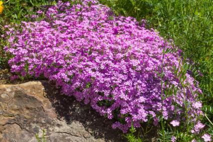 Plants to Use in Rock Gardens – Rock Garden Plants