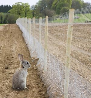 Rabbit Proof Garden Fencing
