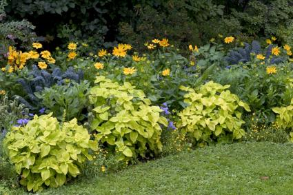 Landscape ideas that reduce grass for Low maintenance full sun perennials