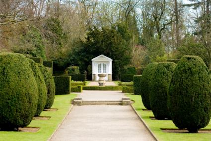 wide path with topiary shrubs