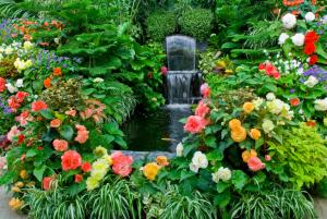 begonias and water feature