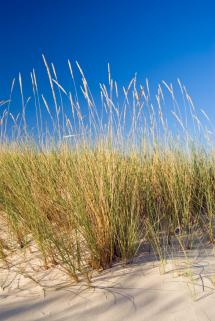 native coastal grasses