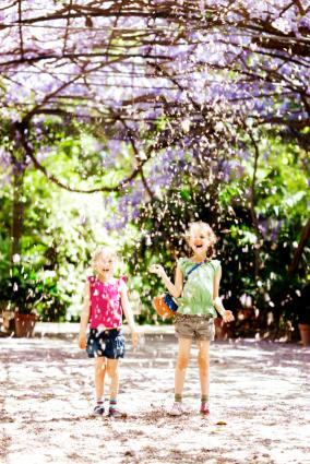 Wisteria canopy creating a petal shower