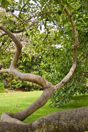 fertilize for a healthy tree