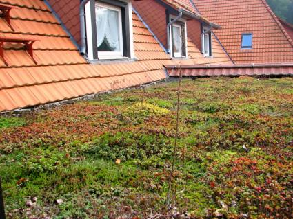 green roof with terra cotta tiles