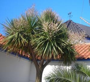 yucca Mediterranean architecture