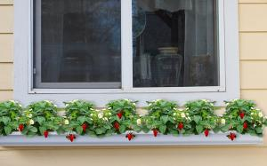 strawberry rain gutter garden