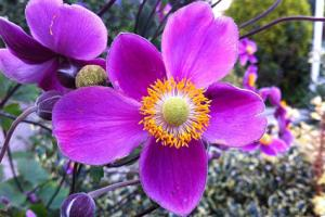 anemone up close