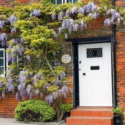wisteria brick house