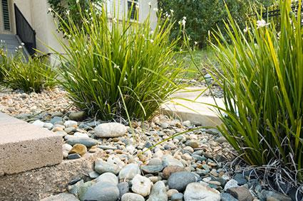 small pebbles with ornamental grasses