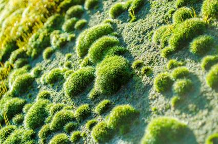mounds of moss