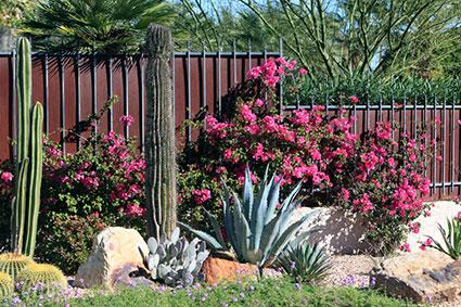 Desert Garden Design southwest garden designs great southwest landscape design ideas Desert Landscape Design