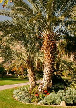 Palm tree in garden