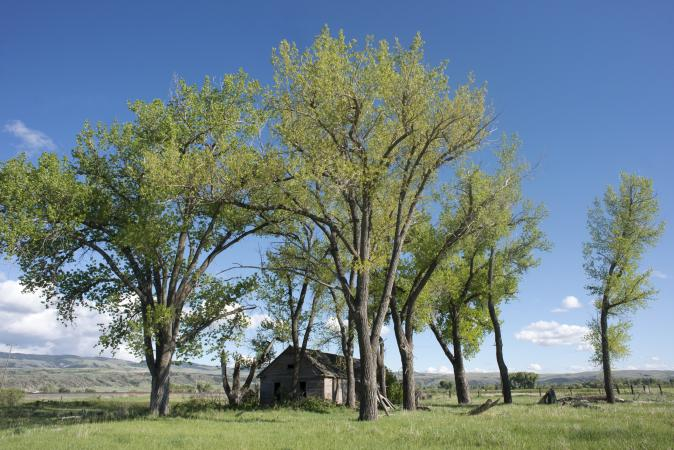 Cottonwood Homestead