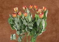 Ten roses