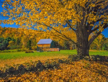 Types of Maple Trees | LoveToKnow | 450 x 341 jpeg 49kB