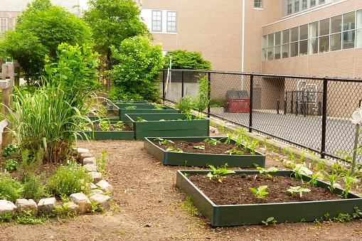 Raised flower beds in a school garden