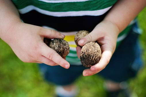 Boy holding walnuts
