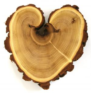 Acacia heart