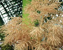 219922-220x176-royalpalmflowers Palm House Plant With Yellow Flowers on vine plant with yellow flowers, broadleaf plant with yellow flowers, succulent plant with yellow flowers, fern plant with yellow flowers,