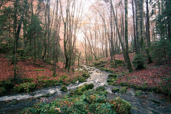Trees and Stream In Forest