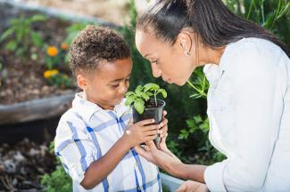 Little boy with mother holding seedling