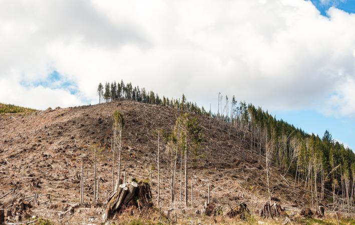 Deforestation