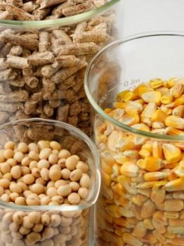 Wood pellets, soybeans and corn in lab