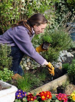 Gardening with thyme