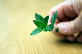 Herbs can be powerful medicines.