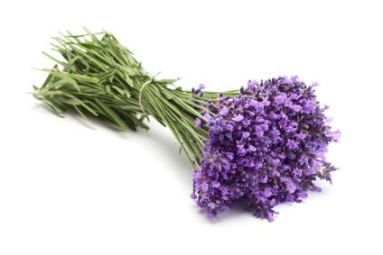 uses of lavender flowers, Beautiful flower