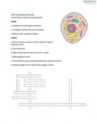 Cellular Respiration For Kids Worksheets