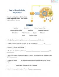 Cellular Respiration Worksheets for Middle School