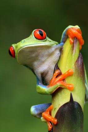 Pictures of animals that live in a jungle slideshow for Classic jungle house for small animals