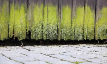 Rotten exterior door