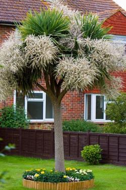 yard tree