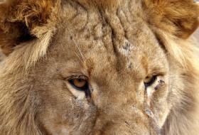 Leo personality profile female
