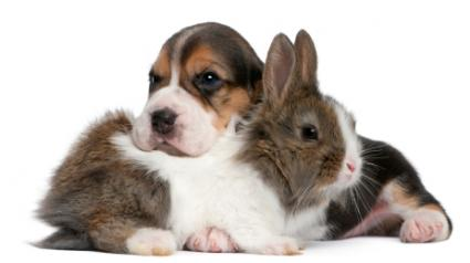 Puppies Bunnies on Chinese Astrology Signs Rabbit And Dog Compatibility