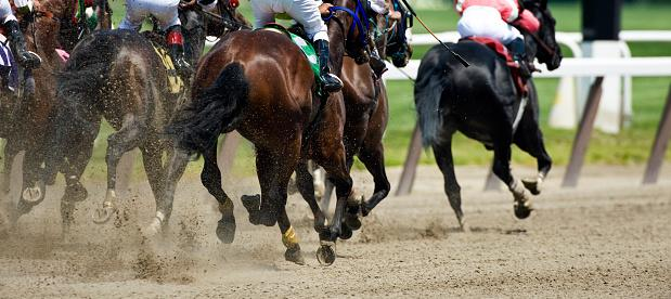 Horse Racing down the stretch