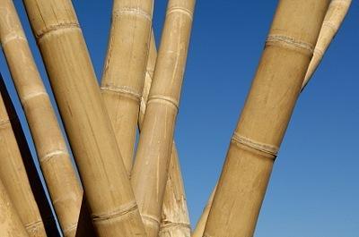 Bambusové palice