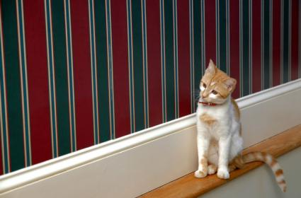 kitten on ledge