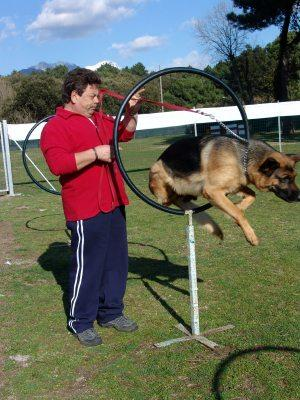 Dog Training Career