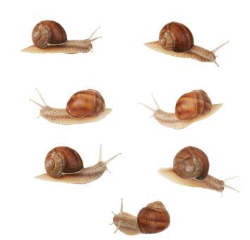 Several snails