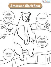 bears printable