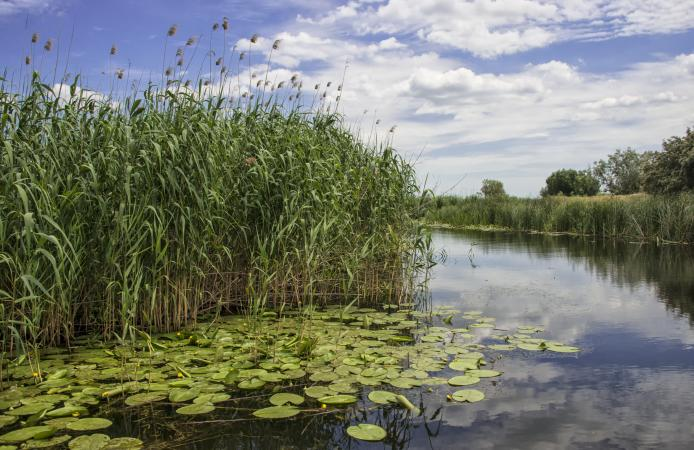 Wetland bird habitat