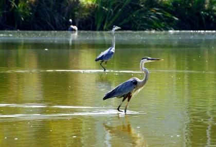 Wetlands for Kids